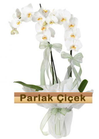İstoç Çiçekçi Beyaz Orkide Çift Dal Aşkına