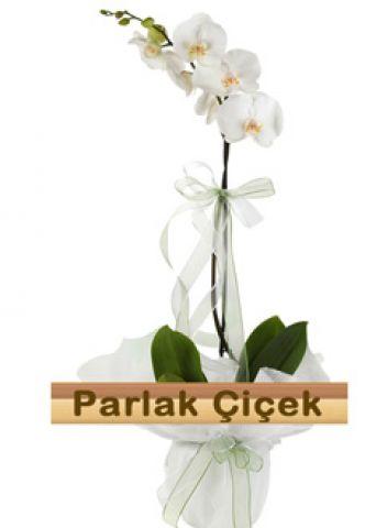 İstoç Çiçekçi Beyaz Orkide Tek Dal Güzel
