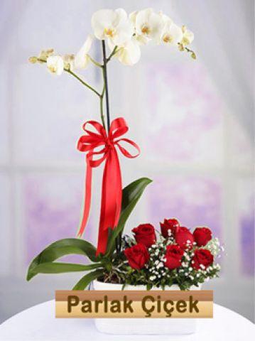 İstoç Çiçekçi Orkide Gül Arajman