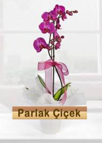 İstoç Çiçekçi Pembe Orkide Tek Dal