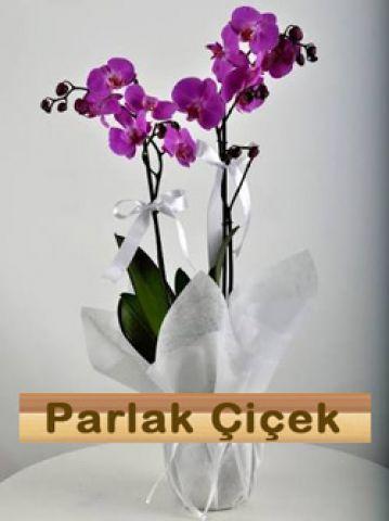 İstoç Çiçekçi Pembe Orkide İki Dal