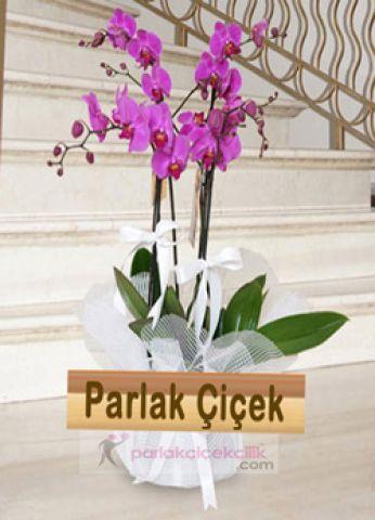 İstoç Çiçekçi Pembe Orkide Grup