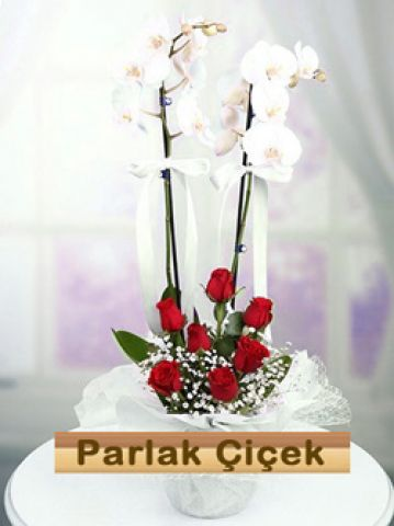 İstoç Çiçekçi Beyaz Orkide Çift Dal